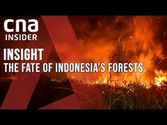 Can Indonesia Save Its Vanishing Forests, Or Is It Too Little, Too Late? | Insight | Climate Change - YouTube Sustainable Tourism, Tropical Forest, Climate Change, Insight, Asia, Forests, Arizona, Public, Live