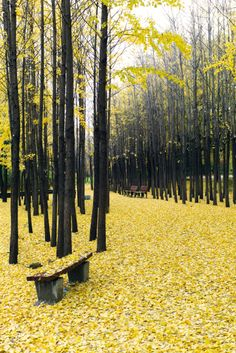Autumn in Seoul, South Korea Isla Jeju, Seoul Korea, Beautiful Places, Beautiful Pictures, Travel Photography, Seoul Photography, South Korea Photography, Nature Photography, The Great Outdoors