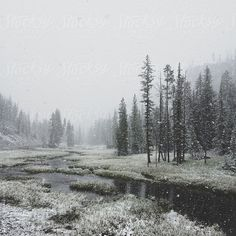 Snowy Forest River by Kevin Russ