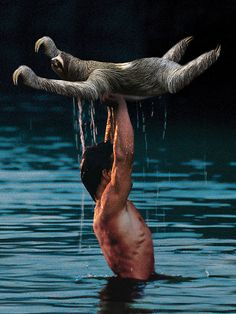 Wall Art, Sloth, Dirty Dancing, Poster, 18x24 Print - one of the most majestic posters i have ever seen :D