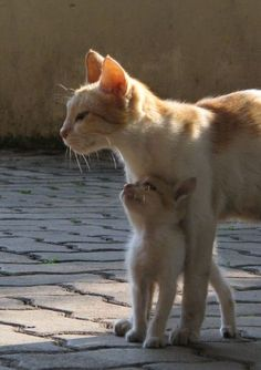 OMG! Too cute!! Mom cat and her kitten.