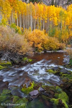 White River National Forest, Colorado | Tad Bowman