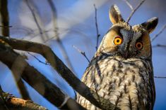 Az év madara! #Magyarország #program #programok #feltöltődés #pihenés #napicuki Owl, Animals, Wood, Animales, Animaux, Owls, Animal, Animais