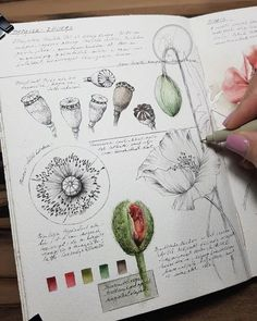 Good Pictures Scrapbooking Pages travel Suggestions Collection your current pics usually takes time. Many photos does not have to be or may not be cropp Nature Sketch, Nature Drawing, Garden Drawing, Botanical Drawings, Botanical Prints, Art Sketches, Art Drawings, Drawing Faces, Arte Sketchbook