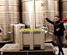Homogen und sehr ausgewogen. Ein feines Beispiel Weinviertlerischer Rieslingkunst.  Riesling Terrassen Sonnleiten, 2012, Pfaffl - http://www.dieweinpresse.at/riesling-terrassen-sonnleiten-2012-pfaffl/