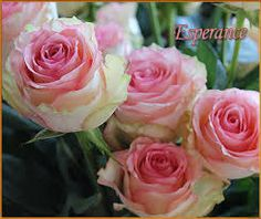 rose esperance - Google-Suche
