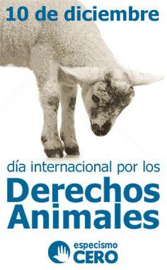 10 de diciembre - Dia internacional por los derechos de los animales #causa