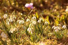 Marlene's Blog #spring
