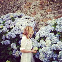 Beautiful hydrangeas - my wedding bouquet & our flower arrangements were huge hydrangeas!