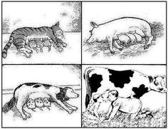 Es absurdo que el ser humano siga tomando leche.