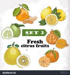 设置2新鲜柑橘类水果柠檬,米尼奥拉,柑橘、柚子、佛手柑和普通话。矢量插图设计-食品及饮料,物体-海洛创意正版图片,视频,音乐素材交易平台-Shutterstock中国独家合作伙伴-站酷旗下品牌