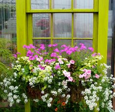You can't go wrong with pink, white and green for a simple yet attractive color combination, especially when set off against the vibrant green of the window frame.