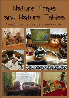 Nature Trays and Nature Tables- trays would be a good idea to display our nature finds!