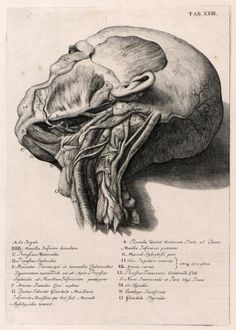 Myotomia reformata : or an anatomical treatise on the muscles of the human body. Illustrated with figures after the life. By the late Mr. William Cowper, Surgeon, and Fellow of the Royal . Anatomy Sketches, Art Sketches, Human Anatomy Drawing, Dark Drawings, Medical Anatomy, Medical Art, Medical Illustration, Human Art, Anatomy Reference