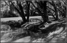 Recanto um riacho, árvores