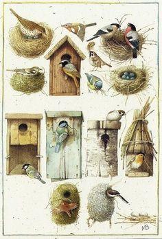 Little bird illustration marjolein bastin 29 Super Ideas – Bird Supplies Small Birds, Love Birds, Beautiful Birds, Pet Birds, Big Bird, Little Birds, Beautiful Pictures, Marjolein Bastin, Flora Und Fauna