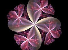 flor, fractal, fractais, rosa, creme