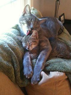 The kitten looks just like my kitty did when she was a kitten :') So sweet!!