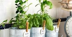 Plant a DIY Herb Garden with these cheap & easy ideas. From potted herb gardens to repurposed planter ideas, there are many ways to create a herb garden! Diy Herb Garden, Garden Ideas, Lots Of Money, Potting Soil, Korn, Fresh Herbs, Indoor Plants, Easy Diy, Planter Pots