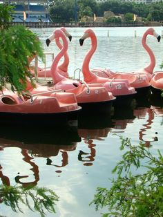 Flamingo boats - I remember going in swan boats as a kid - I love these - something magical about them!
