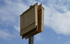 How to Build A Bat House | Bat House Plans For Your Homestead