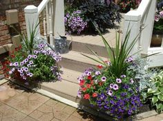 Wave petunias, spike plants and dusty miller!  Great sun combo!