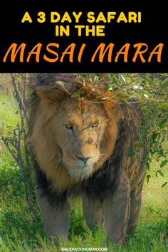 A Backpackers Safari Into The Masai Mara - Backpackingman Kenya Travel, Africa Travel, Bali, Safari Holidays, Jungle Safari, Wanderlust Travel, Places To Travel, Travel Destinations, Tanzania