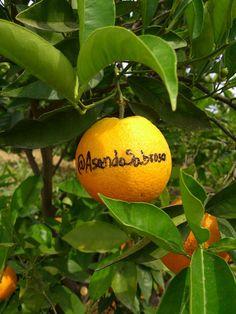#minaranja ---- Naranja Ecológica dedicada a @AsandoSabroso, de la empresa de condimentos McCormick ---- Busca en Twitter #minaranja en @NaranjasChe  ------ www.NaranjasChe.com