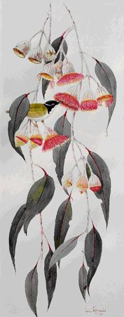 Helen Fitzgerald 'Eucalyptus caesia silver princess' watercolour Australian Native Flowers, Australian Art, Australian Wildflowers, Plant Illustration, Botanical Illustration, Botanical Drawings, Botanical Prints, Watercolor Flowers, Watercolor Art
