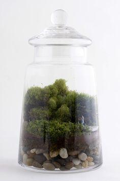 Enchanted by Twig Terrarium   twigterrariums