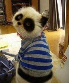 EU QUERO UM PANDA!!