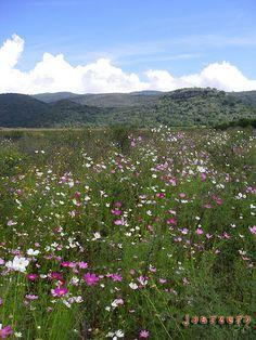 El Cielo, Reserva De La Biosfera, Tamaulipas Mexico