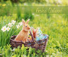 """Ostern steht vor der Tür! 🐇 Es wird geschmückt, gebastelt und genascht und das geht ganz nachhaltig, umweltfreundlich und fair – so wie bei unseren Taschen! 💚 So kann man z.B. das Osterkörbchen selbst nähen und bunte Bonbons herstellen. 🍭 Für alle die sich selbst oder anderen etwas schenken möchten gibt´s -10% Rabatt auf die gesamte Bestellung. Der Code """"OSTERN10"""" ist am Ostersonntag und Ostermontag gültig! Wir wünschen euch schöne Feiertage und tolles Osterfest! 🐤 #Osterrabatt… Spring Is Here, Spring Time, Springtime Pictures, Baby Animals, Cute Animals, Spring Valley, Everything Is Possible, Spring Has Sprung, New Beginnings"""