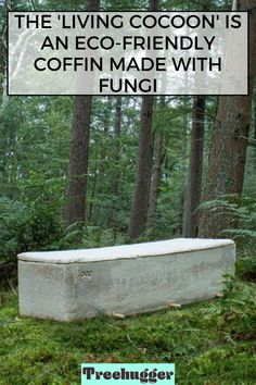 Looking for a greener burial? This mycelium-based coffin is designed to accelerate natural decomposition, and to help remediate contaminated soils. Innovative Architecture, Sustainable Design, Fungi, Coffin, Sustainability, Eco Friendly, Natural, Green, Mushrooms