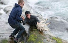 norrmän räddar lamm ur havet