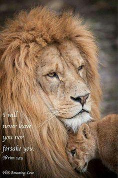 Hebrew 13:5