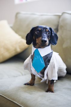 why not get your dog a blue tie to celebrate with you?