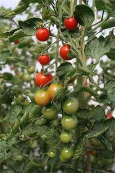 Veggie Gardening - How to Grow A Rich Vegetable Garden