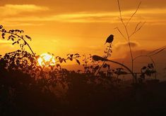 Sunset con pájaro . . . . . . . . #places #lugares #asturias #winter#invierno #sunset #sol #sun #canonEOS5DMarkIV @canonespana #color #puestadesol #backlight #christmas Sol Sun, Celestial, Sunset, Instagram, Outdoor, Color, Sunsets, Birds, Winter