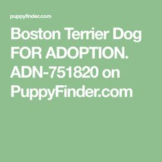 Boston Terrier Dog FOR ADOPTION. ADN-751820 on PuppyFinder.com