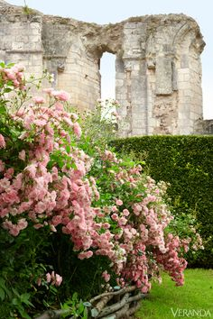 Enchanting Spaces, The ruins of a 12th-c. Abbey give structure to the rose garden, Dorothy Perkins roses, Yew hedge.