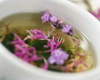 Tisanothérapie - recettes tisanes Les plantes et les éléments naturels