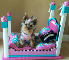 Puppy Beds, Pet Beds, Personalized Dog Beds, Puppy Crafts, Diy Dog Bed, Dog Furniture, Dog Rooms, Yorkie Puppy, Pet Costumes