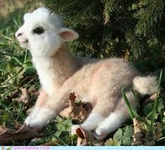 OMG.  Tiny Alpaca (or lama as the case may be), I must have you.  Think of all the tiny sweaters we can make together.