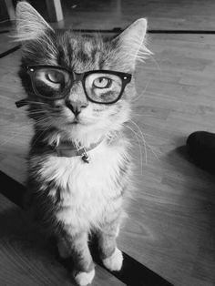 """""""Cats are smart.  You know it, and I know it."""" --Debbie Mertens"""