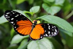 Blooms & Butterflies at #Franklin Park Conservatory - March 9 thru September 2! #Columbus #Ohio