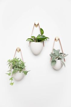 hanging plants indoor A floating garden in polished matte porcelain. This planter elevates your room and accentuates the beauty of your plants with its simple presence and clean c Bathroom Red, Bathroom Plants, Plants In Bedroom, Indoor Planters, Hanging Planters, Wall Hanging Plants Indoor, Hang Plants On Wall, Wall Plant Pot, Wall Mounted Planters