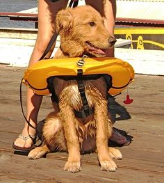 Our four-legged friends are like members of the family, and #water #safety is equally as important for them as for us.  Here are several examples of #lifevest styles for your pet!