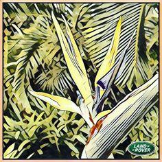 # LandRoverWinter 41/44 @Prisma ~ 44*effects+% Square size. 🎬🎨 Painterly photo Editing app * #PrismaApp #getPrisma #Prisma #prisma🔼 #prisma🔺 #prismaLook #prismaVibe #prismaNsk _All Is #AfterEffects #FilterEffects #PrismaEffects #EditorEffects by #ArtFilters #PhotoEditing *#Edited_iam to #ARTificialEffects #DigitalArt #NeuralEffects #NeuralArt with #Joyance #JoyRide 🎠.
