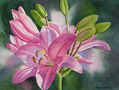Pink Lily With Buds Painting by Sharon Freeman - Pink Lily With Buds Fine Art Prints and Posters for Sale